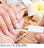 Купить «Процедура салонного маникюра. Нанесение лака», фото № 5336499, снято 18 ноября 2013 г. (c) Валуа Виталий / Фотобанк Лори
