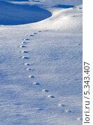 Красивый зимний вид со следами животных на снегу. Стоковое фото, фотограф Олеся Новицкая / Фотобанк Лори