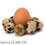 Купить «Перепелиные и куриное яйца», фото № 5346175, снято 23 июня 2010 г. (c) Natalja Stotika / Фотобанк Лори