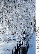 Купить «Обледеневшие ветки деревьев», фото № 5347023, снято 7 декабря 2013 г. (c) Ирина Кожемякина / Фотобанк Лори