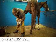 Подковать коня. Стоковое фото, фотограф Дмитрий Владимирович Лыков / Фотобанк Лори