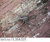 Купить «Большой паук», фото № 5354531, снято 1 января 2004 г. (c) Любовь Назарова / Фотобанк Лори