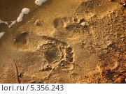 Следы на песке. Стоковое фото, фотограф Наталья Аракчеева / Фотобанк Лори