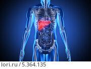 Digital blue human with highlighted liver. Стоковое фото, агентство Wavebreak Media / Фотобанк Лори