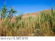 Холмы с выжженной солнцем травой по синим небом. Стоковое фото, фотограф Александр Орлов / Фотобанк Лори