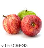 Купить «Два красных и одно зеленое яблоко на белом фоне», фото № 5389043, снято 22 февраля 2011 г. (c) Natalja Stotika / Фотобанк Лори