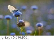 Бабочка на цветке. Стоковое фото, фотограф Сергей Юшинский / Фотобанк Лори