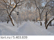 Нарымский сквер. Новосибирск (2010 год). Стоковое фото, фотограф Наталья Раковская / Фотобанк Лори