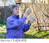 Купить «Женщина опрыскивает дерево от вредителей», фото № 5424419, снято 2 мая 2013 г. (c) Марина Славина / Фотобанк Лори
