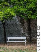 Лавочка под мандариновым деревом. Стоковое фото, фотограф Владимир Вольвач / Фотобанк Лори