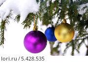 Заснеженная еловая ветка с ёлочными шарами. Стоковое фото, фотограф Анастасия Кунденкова / Фотобанк Лори