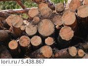 Купить «Спил бревен сосны», эксклюзивное фото № 5438867, снято 24 мая 2013 г. (c) Алёшина Оксана / Фотобанк Лори