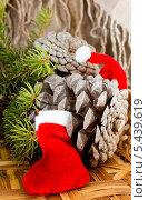 Купить «Новогодняя композиция», фото № 5439619, снято 29 декабря 2013 г. (c) Наталья Осипова / Фотобанк Лори