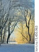Купить «Лучи солнца в зимнем лесу», фото № 5450963, снято 3 января 2014 г. (c) александр жарников / Фотобанк Лори