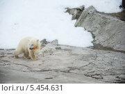 Медвежонок с морковкой. Стоковое фото, фотограф Сергей Панков / Фотобанк Лори