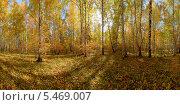 Купить «Панорама осеннего леса», фото № 5469007, снято 21 августа 2019 г. (c) Юрий Бельмесов / Фотобанк Лори