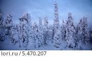 Купить «Закат в зимнем лесу», фото № 5470207, снято 13 января 2011 г. (c) Гараев Александр / Фотобанк Лори