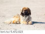 Купить «Собака на улице», фото № 5472023, снято 10 июня 2011 г. (c) Василий Вишневский / Фотобанк Лори