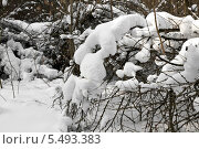 Снег на кустах. Стоковое фото, фотограф Левончук Юрий / Фотобанк Лори