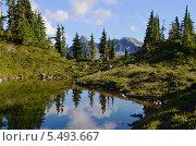 Британская Колумбия, Канада, долина Белла Кула. Стоковое фото, фотограф Galina Vydryakova / Фотобанк Лори