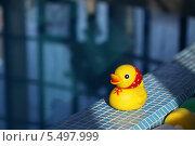 Резиновая желтая уточка возле бассейна. Стоковое фото, фотограф Виктория Чеканова / Фотобанк Лори