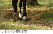Скачущая лошадь. Стоковое видео, видеограф Иван Артемов / Фотобанк Лори