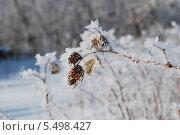 Снежинки на листьях малины. Стоковое фото, фотограф Сергей Кожин / Фотобанк Лори
