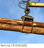 Купить «Заготовка древесины», фото № 5514023, снято 20 декабря 2013 г. (c) Швадчак Василий / Фотобанк Лори
