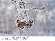 Купить «Репей в инее», фото № 5514367, снято 18 января 2014 г. (c) Павел Москаленко / Фотобанк Лори