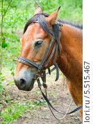 Лошадь крупным планом. Стоковое фото, фотограф Opra / Фотобанк Лори