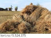 Снопы пшеницы на поле на фоне ветряных мельниц. Стоковое фото, фотограф Insomnia / Фотобанк Лори