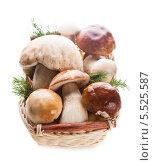 Корзинка со свежими грибами и зеленью. Стоковое фото, фотограф Оксана Ковач / Фотобанк Лори