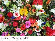 Купить «Красивый большой букет из калл, лилий, роз и гербер», фото № 5542343, снято 4 сентября 2012 г. (c) Losevsky Pavel / Фотобанк Лори