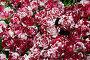 Бутоны красно-белых роз, фон, фото № 5542355, снято 4 сентября 2012 г. (c) Losevsky Pavel / Фотобанк Лори