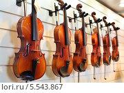 Купить «Ряд скрипок висят на стене в магазине», фото № 5543867, снято 22 сентября 2012 г. (c) Losevsky Pavel / Фотобанк Лори