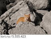 Купить «Рыжий кот на камнях», фото № 5555423, снято 22 октября 2013 г. (c) Илюхина Наталья / Фотобанк Лори