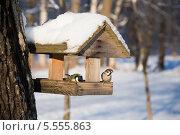 Купить «Воробей и синичка в кормушке», эксклюзивное фото № 5555863, снято 22 января 2014 г. (c) Александр Щепин / Фотобанк Лори