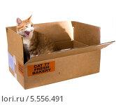 Купить «Орущий рыжий кот в картонной коробке», фото № 5556491, снято 4 февраля 2014 г. (c) Ирина Кожемякина / Фотобанк Лори