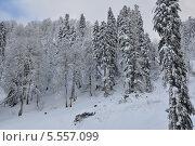 Зимний лес. Стоковое фото, фотограф Александр Белошниченко / Фотобанк Лори