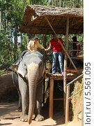 Купить «Туристка готовится к путешествию верхом на слоне по джунглям», фото № 5561095, снято 2 декабря 2012 г. (c) Михаил Коханчиков / Фотобанк Лори