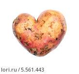 Купить «Генетически модифицированный картофель в виде сердца на День святого Валентина», фото № 5561443, снято 31 января 2014 г. (c) Евгений Ткачёв / Фотобанк Лори