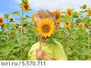 Мальчик в поле подсолнухов прикрывает лицо подсолнечником. Стоковое фото, фотограф Tanya Lomakivska / Фотобанк Лори