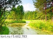 Купить «Река с ряской в хвойном лесу», фото № 5602783, снято 4 августа 2010 г. (c) Константин Лабунский / Фотобанк Лори