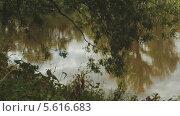 Купить «Ветки ивы на фоне воды», эксклюзивный видеоролик № 5616683, снято 23 февраля 2014 г. (c) Иван Карпов / Фотобанк Лори
