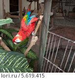 Попугай ара. Стоковое фото, фотограф Дмитрий Емушинцев / Фотобанк Лори