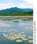 Озеро Манжерок с растущими кувшинками. Алтай, Сибирь, Россия. Стоковое фото, фотограф Opra / Фотобанк Лори