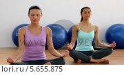 Купить «Fit women doing yoga together in studio», видеоролик № 5655875, снято 16 февраля 2019 г. (c) Wavebreak Media / Фотобанк Лори
