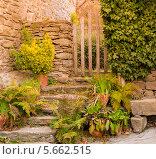Купить «Старая лестница с различными растениями и калиткой», фото № 5662515, снято 16 февраля 2014 г. (c) Andrejs Pidjass / Фотобанк Лори