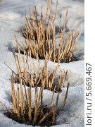 Купить «Проталины на грядках», фото № 5669467, снято 28 февраля 2014 г. (c) Юрий Викулин / Фотобанк Лори