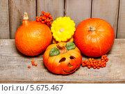 Купить «Тыквы на праздник Хэллоуин на деревянном столе», фото № 5675467, снято 17 августа 2018 г. (c) BE&W Photo / Фотобанк Лори